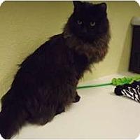 Adopt A Pet :: Mufasa - Modesto, CA