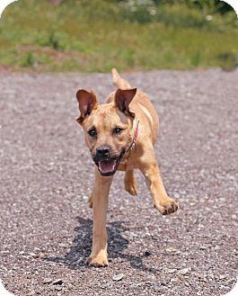 Retriever (Unknown Type) Mix Puppy for adoption in Marietta, Georgia - Rhett