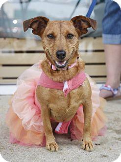 Dachshund/Terrier (Unknown Type, Small) Mix Dog for adoption in Marietta, Georgia - Lillian