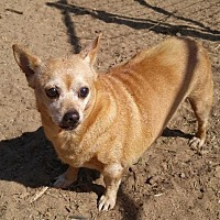 Adopt A Pet :: Honey - Jefferson, TX