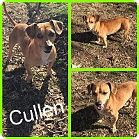 Adopt A Pet :: Cullen - Alvarado, TX