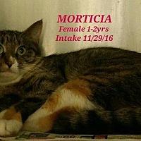 Adopt A Pet :: Morticia - Fayetteville, WV