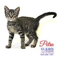 Adopt A Pet :: Petra - Laplace, LA