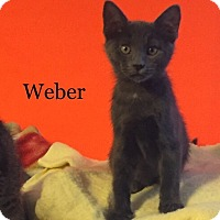 Adopt A Pet :: Kelly's Weber - Yukon, OK