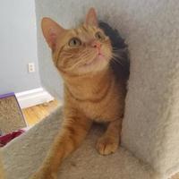 Adopt A Pet :: Leo - Allentown, PA