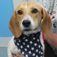 Adopt A Pet :: Marie - Robinson, IL