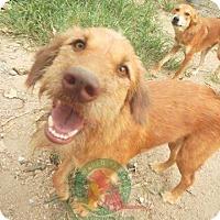 Adopt A Pet :: Nam Tarn - Vancouver, BC