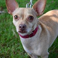 Adopt A Pet :: Enrique - Atlanta, GA