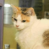 Adopt A Pet :: SELENA - Pittsburgh, PA