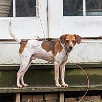 Adopt A Pet :: Diego Hopkins - Waldorf, MD