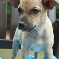 Adopt A Pet :: Paco - Holly Springs, NC
