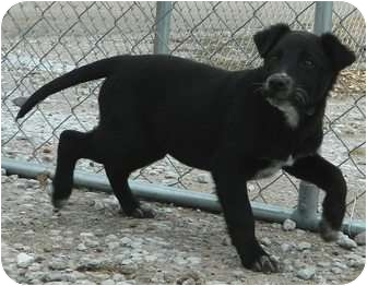 Labrador Retriever Mix Dog for adoption in Columbus, Nebraska - Ava
