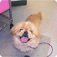 Adopt A Pet :: Harley - Perfect Gentleman - West Warwick, RI