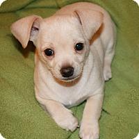 Adopt A Pet :: Polar - Seattle, WA