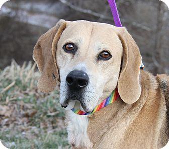 Hound (Unknown Type) Mix Dog for adoption in Marietta, Ohio - Chester (Neutered)