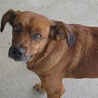 Adopt A Pet :: Meadow - High Point, NC