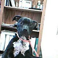 Adopt A Pet :: SHANE - Paradise, CA