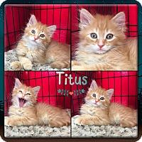 Adopt A Pet :: Titus - Jeffersonville, IN