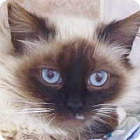 Adopt A Pet :: Roland - Davis, CA