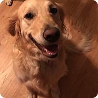 Adopt A Pet :: Dolly Madison - Springfield, MO