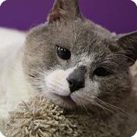Adopt A Pet :: Sweet Boy George - Herndon, VA