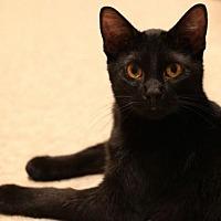 Adopt A Pet :: Harry -- 10 MONTHS - ACTIVE & FUN - Hillside, IL