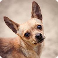 Adopt A Pet :: Boo - Virginia Beach, VA
