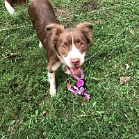 Adopt A Pet :: Penny - ADOPTION PENDING - Garden City, MI