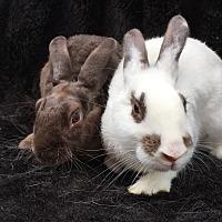 Adopt A Pet :: Coconut & Pistachio - Watauga, TX