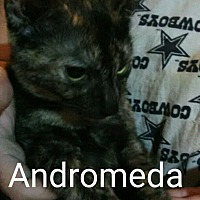 Adopt A Pet :: Andromeda - Middletown, OH