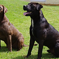 Adopt A Pet :: Finley (CNC) - Brattleboro, VT