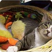 Adopt A Pet :: Furby - Beacon, NY
