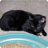 Adopt A Pet :: Colorado - Alexandria, VA
