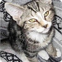 Adopt A Pet :: Apollo - Catasauqua, PA