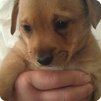 Adopt A Pet :: Chip - Torrance, CA