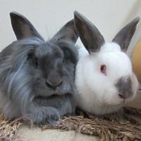 Adopt A Pet :: Wynn & Beatty - Newport, DE