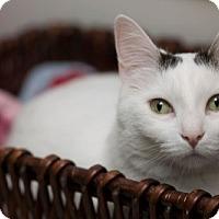 Adopt A Pet :: Gisele Bündchen - Lombard, IL