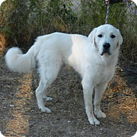 Adopt A Pet :: HUNTER - Granite Bay, CA