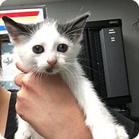 Adopt A Pet :: Poppy - Paducah, KY