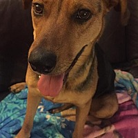 Adopt A Pet :: PP - Whipser - Tucson, AZ