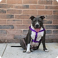 Adopt A Pet :: Gracie - Jerseyville, IL