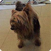 Adopt A Pet :: Finley #1116X - Nixa, MO