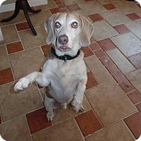 Adopt A Pet :: SHILOAH - Millerstown, PA