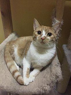 Adopt A Pet :: Zazzy  - Blasdell, NY