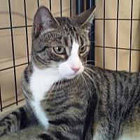 Adopt A Pet :: Eric - Massapequa, NY