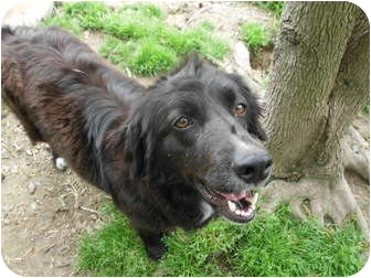 Border Collie Mix Dog for adoption in Boaz, Alabama - Molly