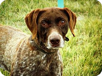German Shorthaired Pointer Mix Dog for adoption in Cheyenne, Wyoming - Princess