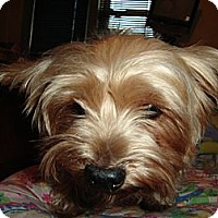 Adopt A Pet :: Sammy - Berlin, WI