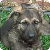 Adopt A Pet :: Roxie - Pike Road, AL