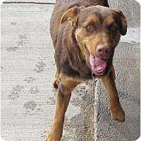 Adopt A Pet :: Frankie - Cedar City, UT